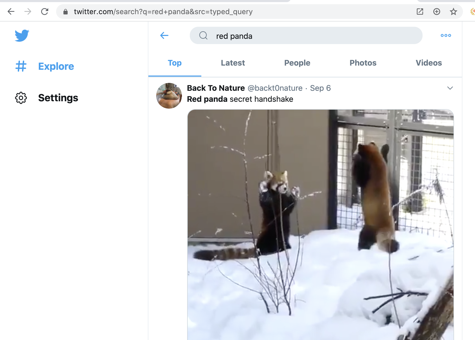 Twitter likes red pandas and so do I
