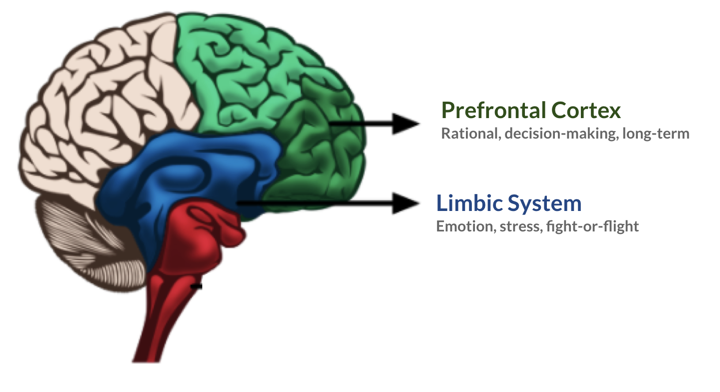 A diagram showing the limbic system and prefrontal cortex in the brain