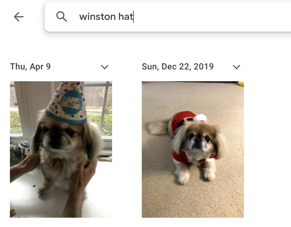 Two pictures of Winston wearing hats with the search winston hat