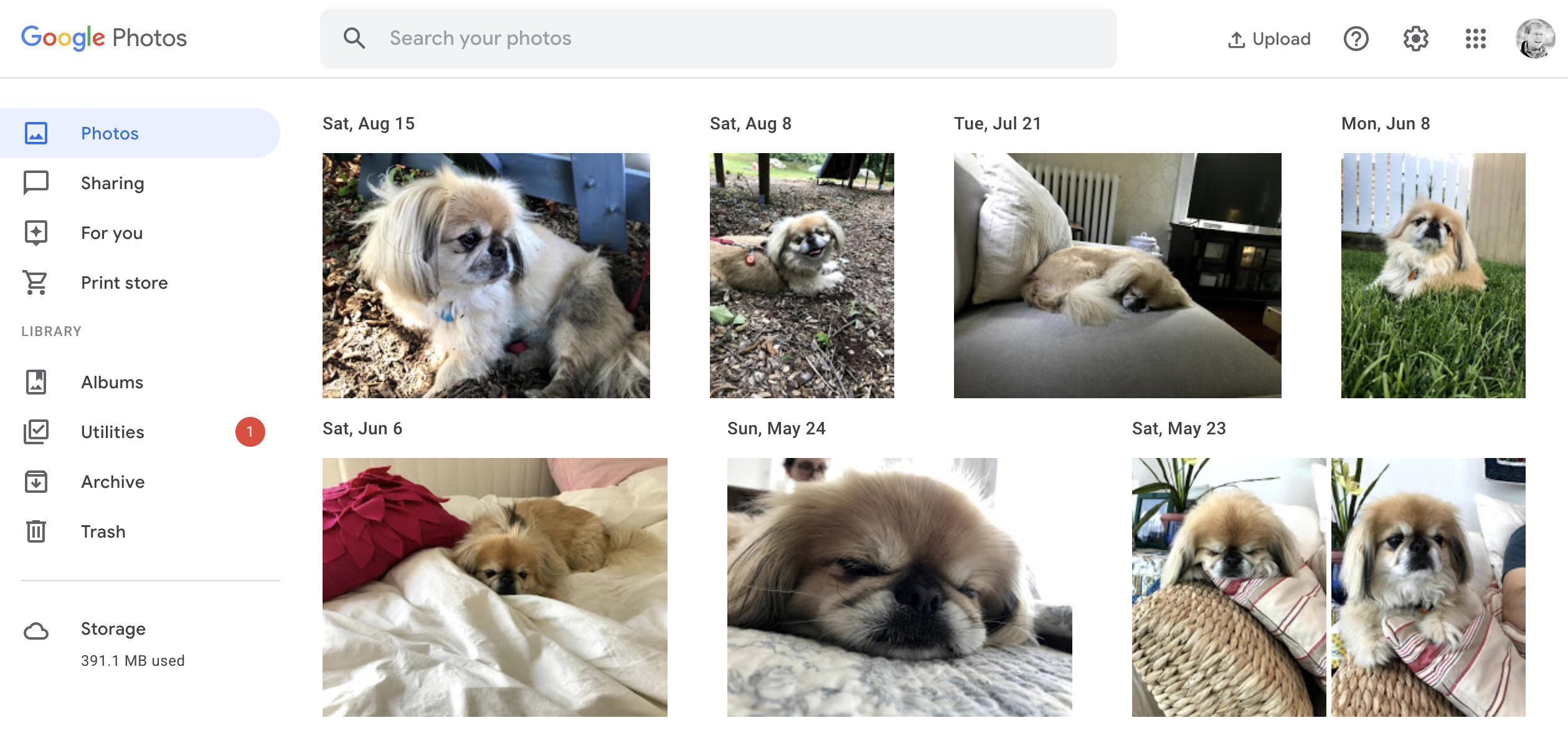 More perfect photos of a perfect dog but this time in Google Photos